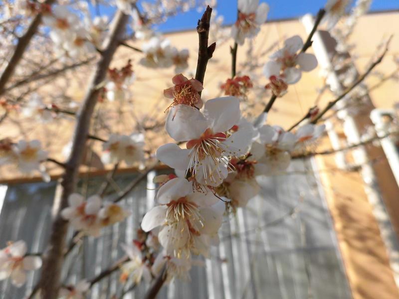 いすみの春